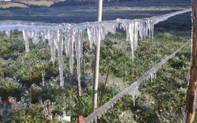 Gobernación de Nariño adelanta acciones de respuesta por heladas
