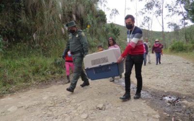 Gobernación de Nariño realizó el acompañamiento al proceso de liberación de fauna silvestre